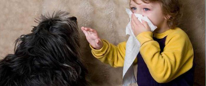 какие собаки можно аллергикам