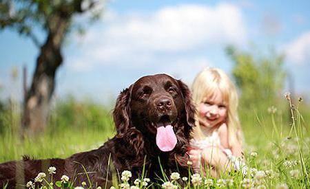 породы собак для аллергиков и астматиков