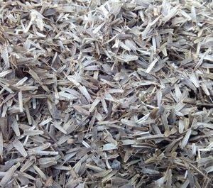 Семена трехраздельной череды
