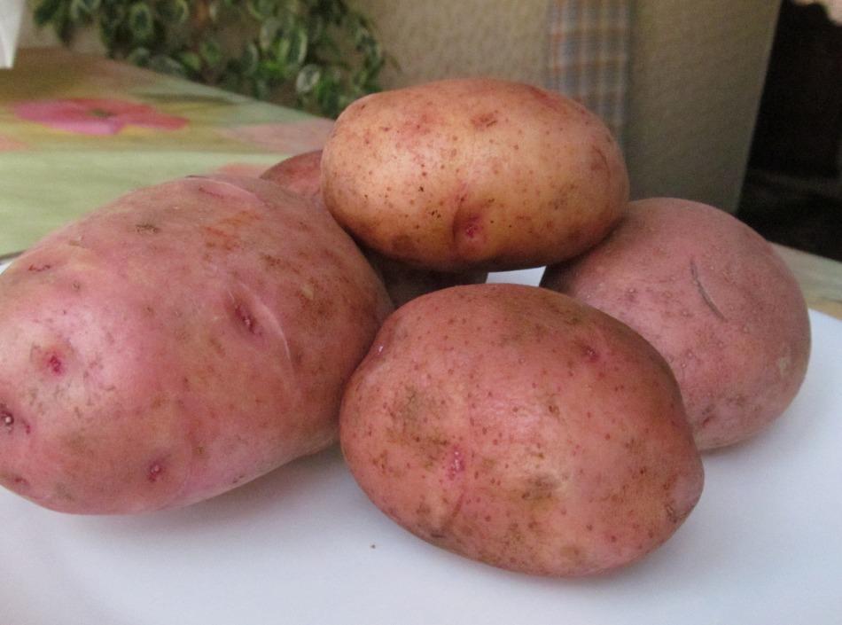 Картофель от зуда в глазах