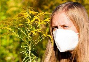 амброзия фото растения аллергия