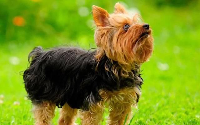 Аллергия - не повод избавляться от собаки