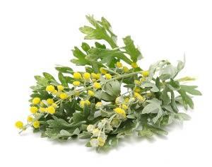 Признаки аллергии на траву