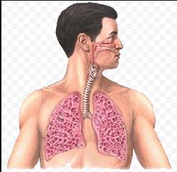 альвеолит