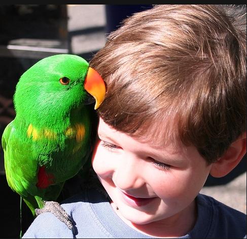 аллергия на попугаев дети