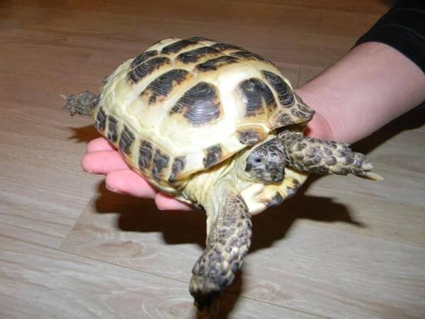 Есть ли аллергия на красноухих черепах