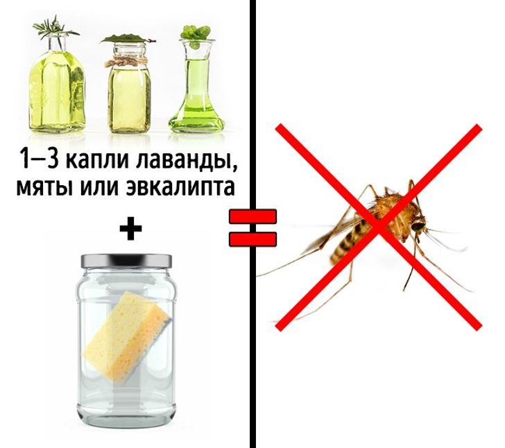 Как избавиться от насекомых дома?